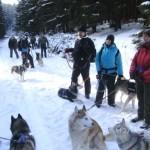 Winterwanderung mit Huskies